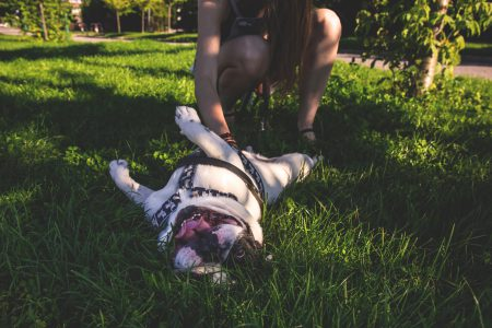 Dog rolling on grass - free stock photo