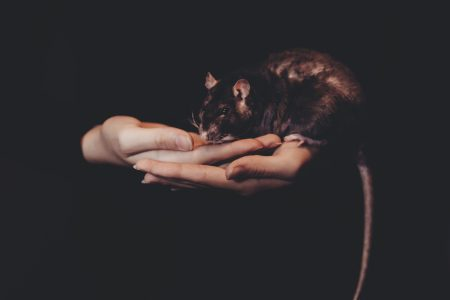 Girl holding a rat