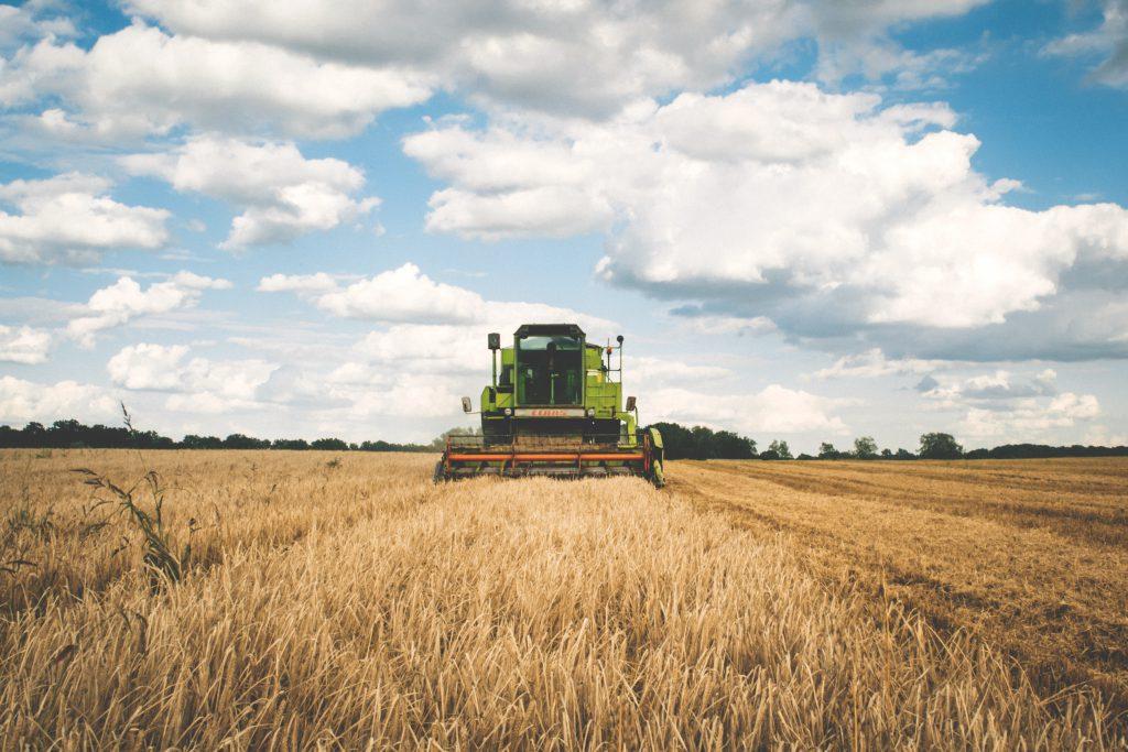 Harvest - free stock photo