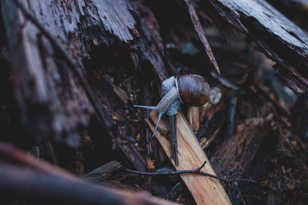 Snail on wood - free stock photo