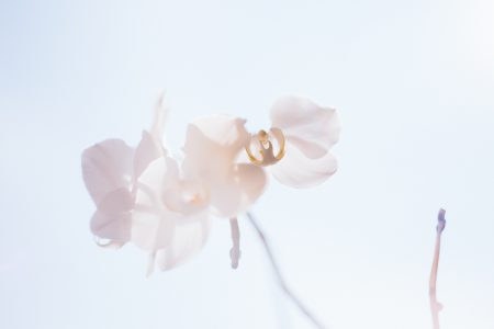 White orchid 2 - free stock photo