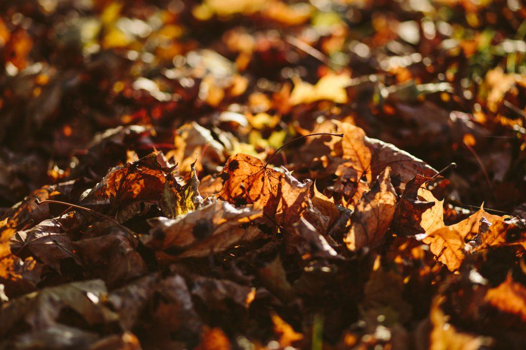 Autumn leaves - free stock photo