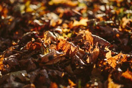 Autumn leaves - free stock photo