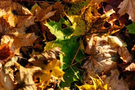 Autumn leaves 2 - free stock photo