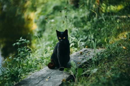 A black cat at the pond - free stock photo