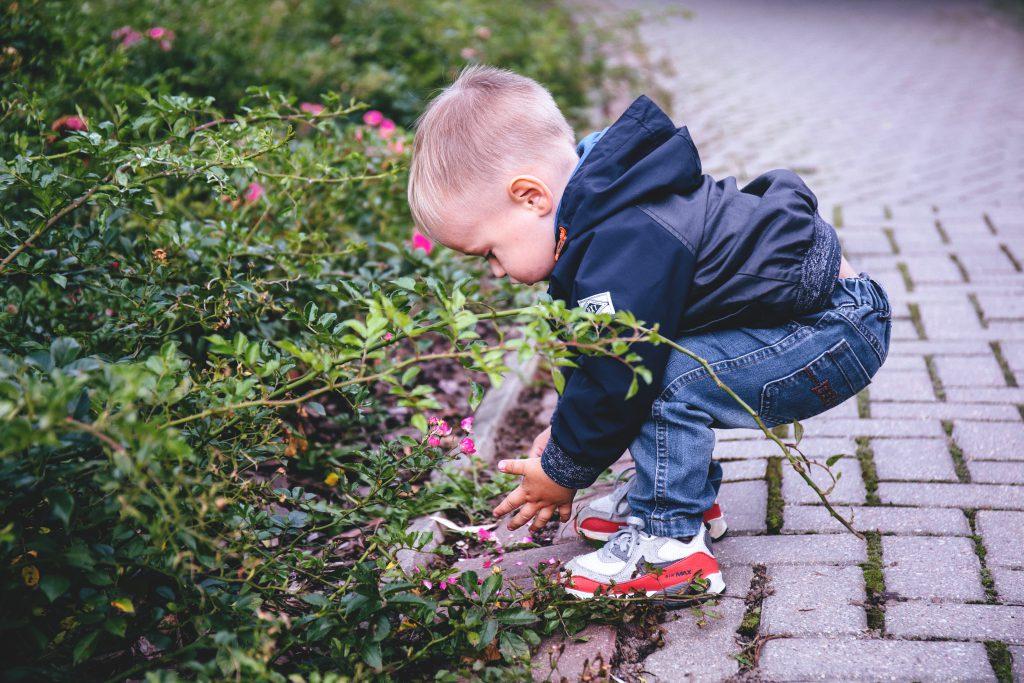 Boy picking flowers - free stock photo