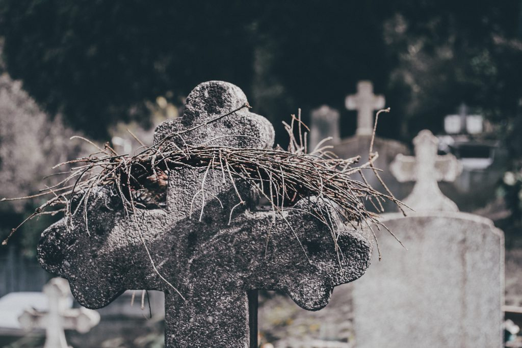 Crown of thorns - free stock photo