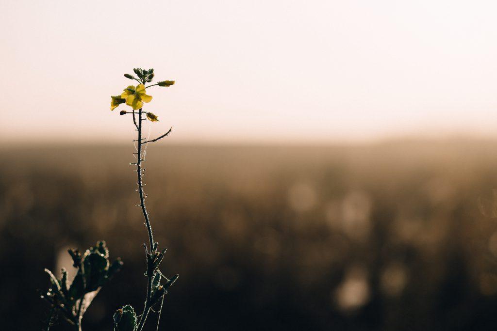 Dew on a meadow flower - free stock photo