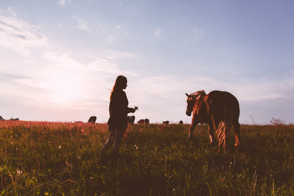 Girl and a horse - free stock photo