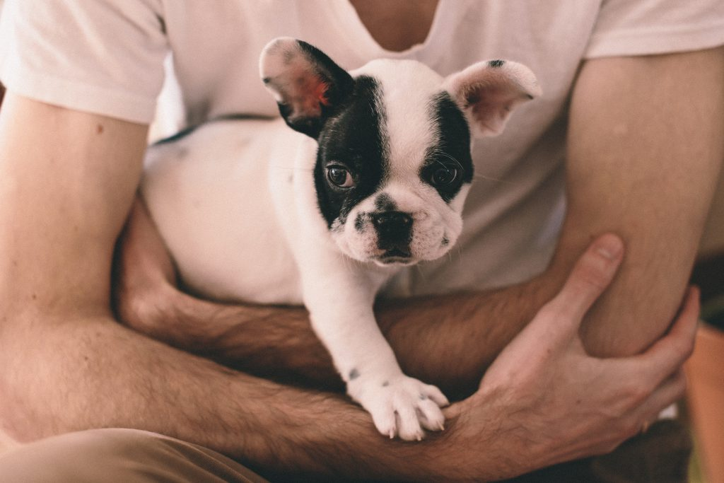 Man with a puppy 2 - free stock photo