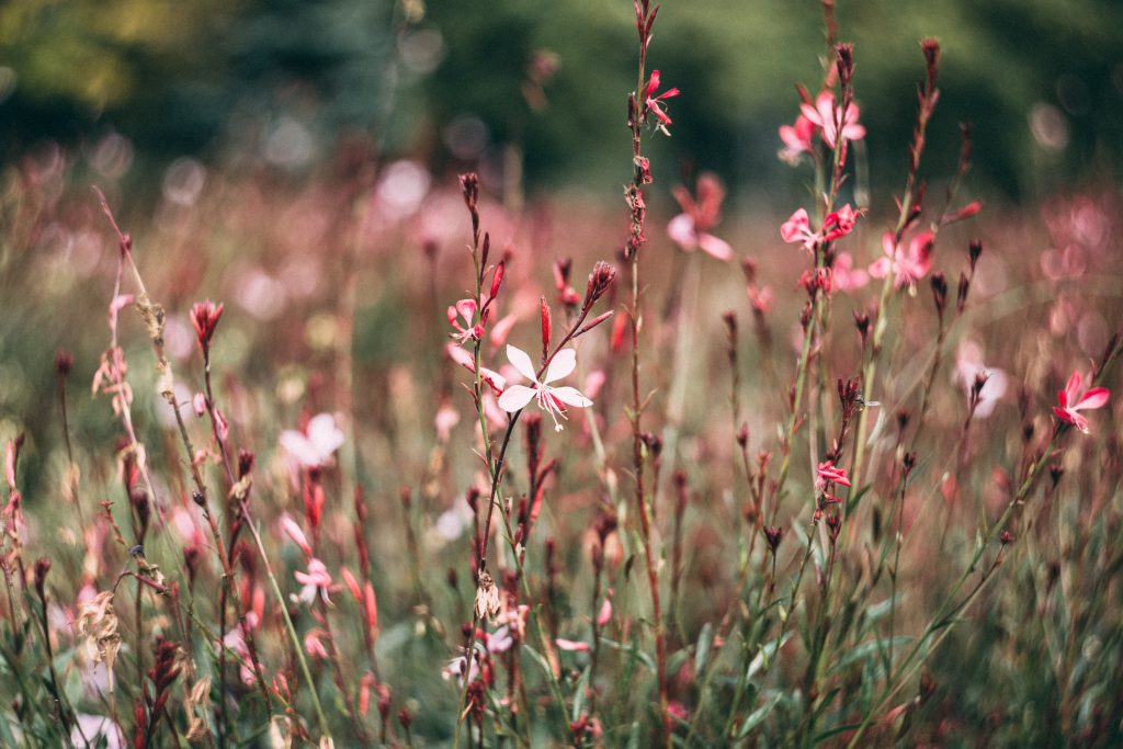 Meadow flowers 2 - free stock photo