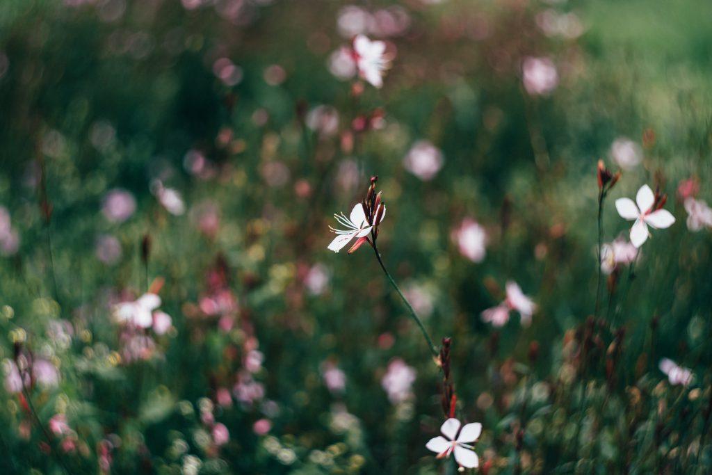 Park flowers - free stock photo