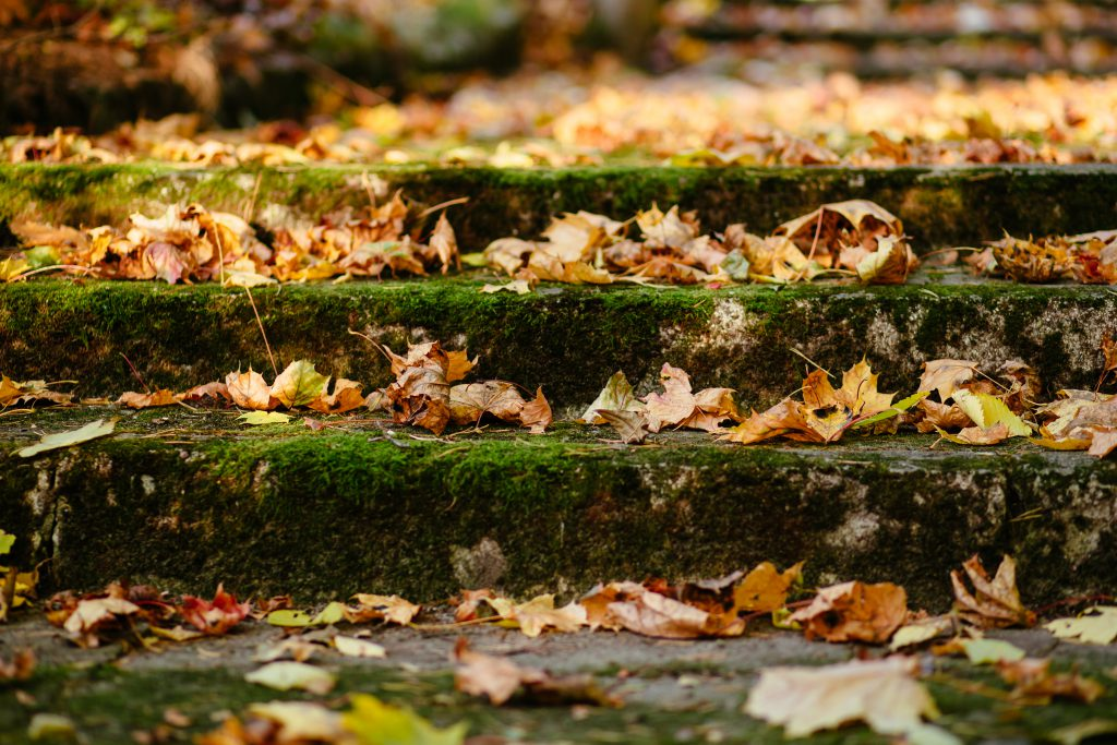 Park stairs in autumn - free stock photo