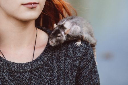 Old rat on a shoulder - free stock photo