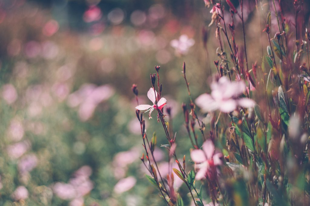Park flowers 3 - free stock photo