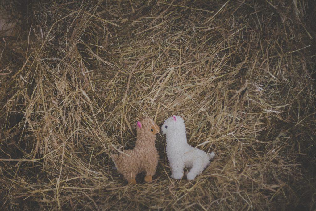 Plush alpacas - free stock photo