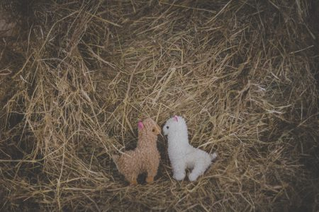 Plush alpacas - free stock photo