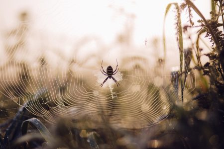Spider on its web 2 - free stock photo