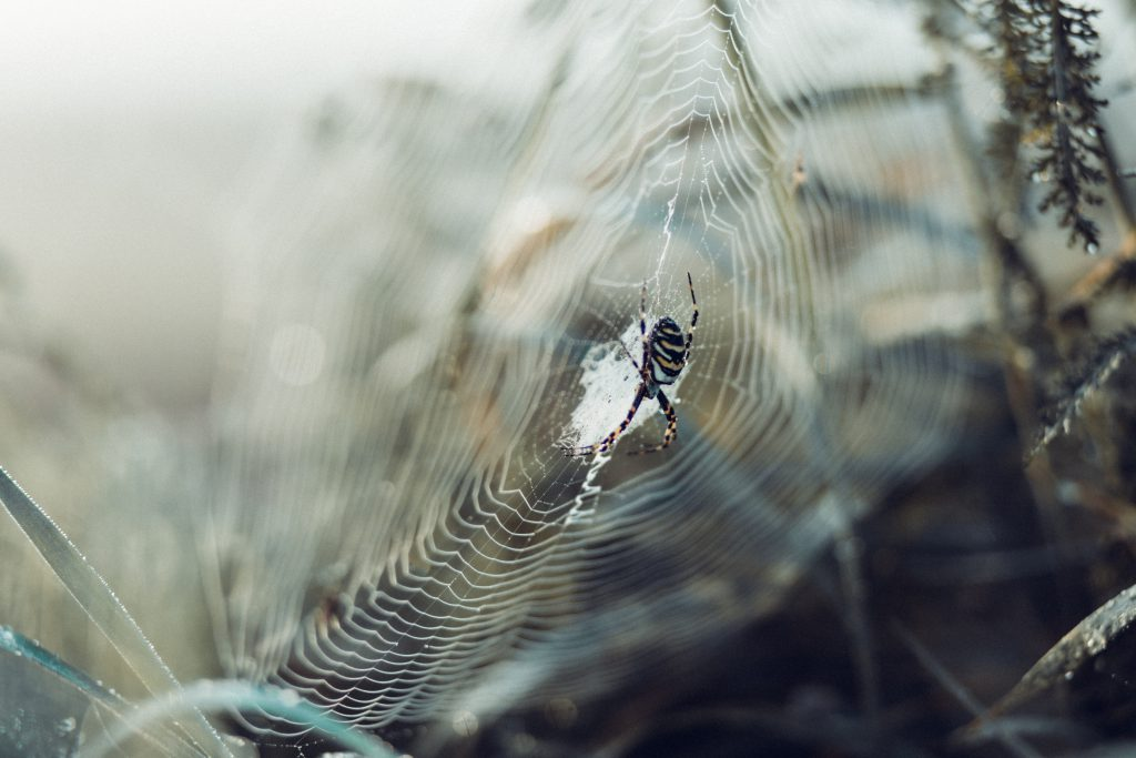 Spider on its web 3 - free stock photo