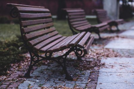 Benches in the park - free stock photo