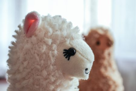 Plush alpacas 2 - free stock photo