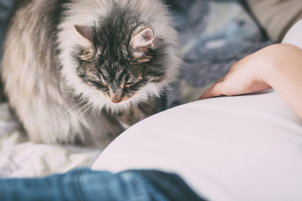 Pregnant woman's belly and a cat - free stock photo