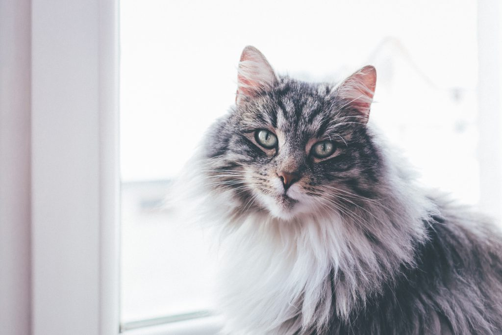 A cat sitting on a windowsill - free stock photo