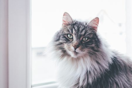 A cat sitting on a windowsill - free stock photo