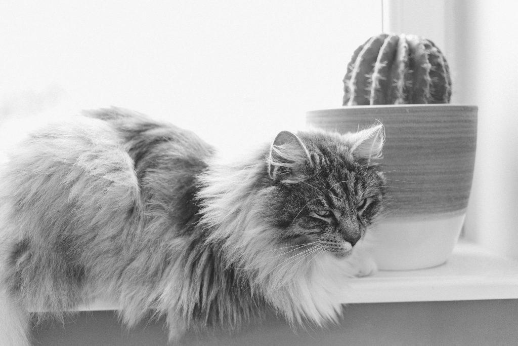 Cat and cactus 2 - free stock photo
