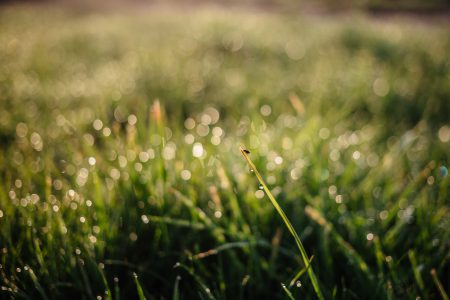 Morning dew on the grass - free stock photo