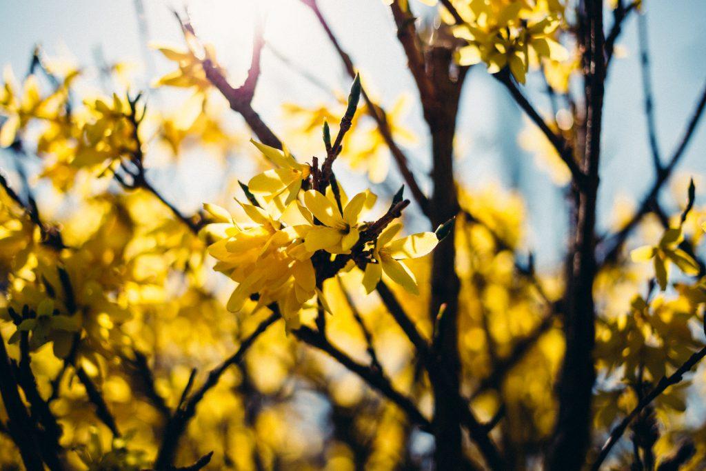 Yellow flowers - free stock photo