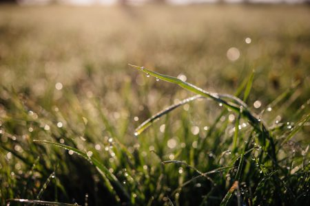 Morning dew on the grass 2 - free stock photo