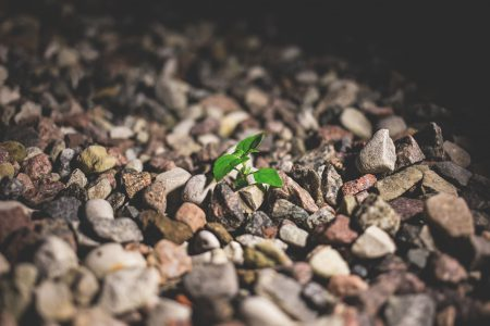 Plant growing between the rocks 2 - free stock photo