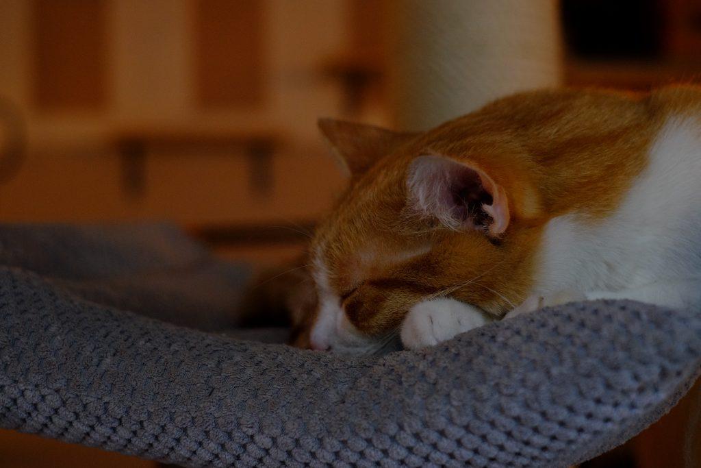 Sleeping cat - free stock photo