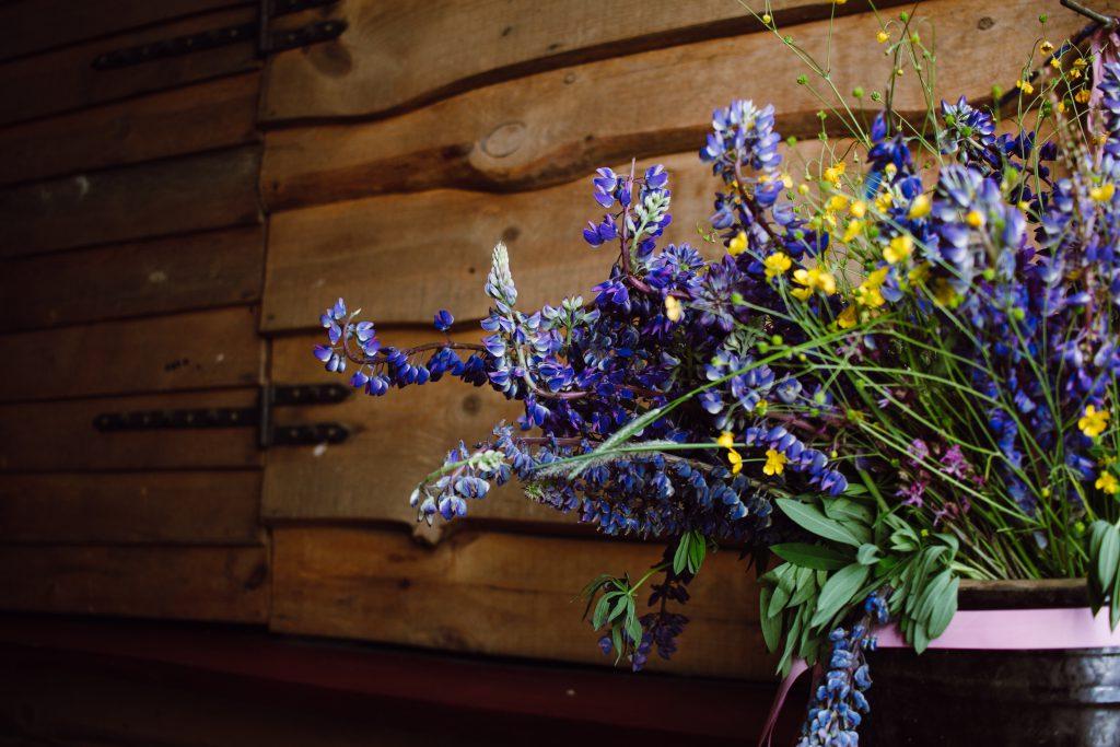 Wild lubine bouquet - free stock photo