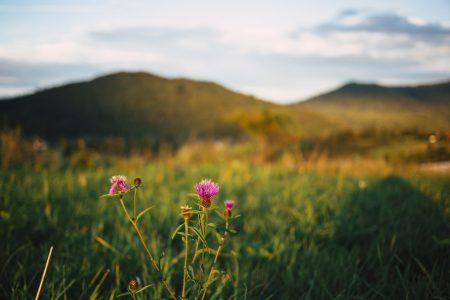 Bieszczady Mountains blurred