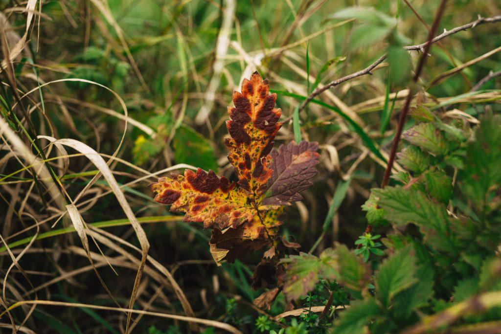 Colorful autumn leaf - free stock photo