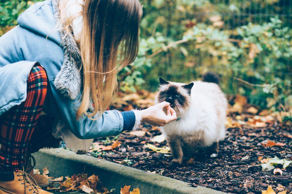 Feeding a cat with a treat - free stock photo