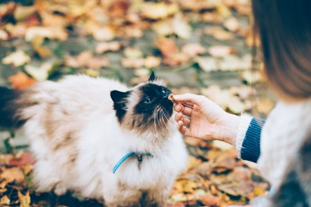 Feeding a cat with a treat 2 - free stock photo