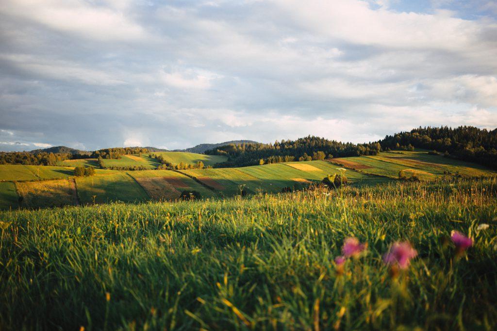 Fields in Bieszczady Mountains 2 - free stock photo