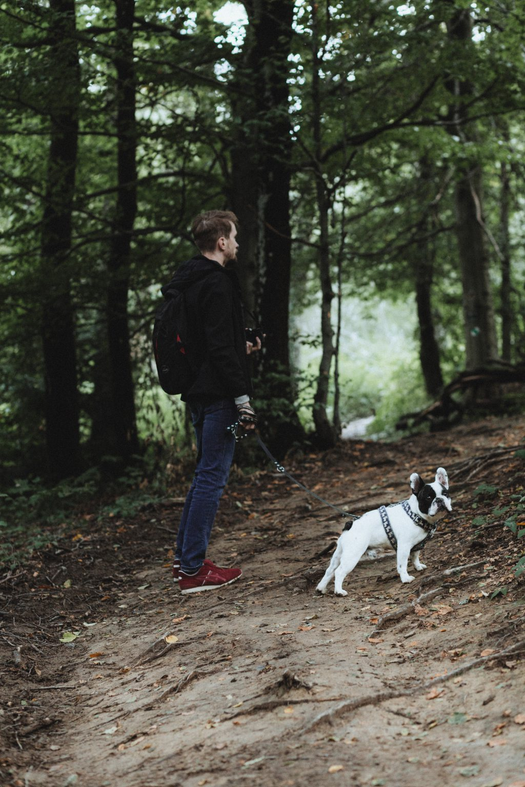 A trip in the mountains with a dog - free stock photo