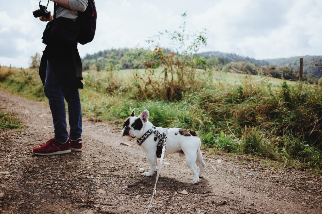 A trip in the mountains with a dog 2 - free stock photo