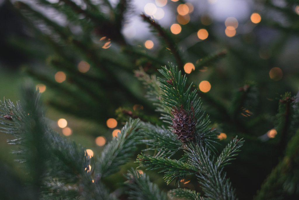Christmas lights on spruce - free stock photo