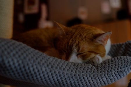 Sleeping cat 2 - free stock photo