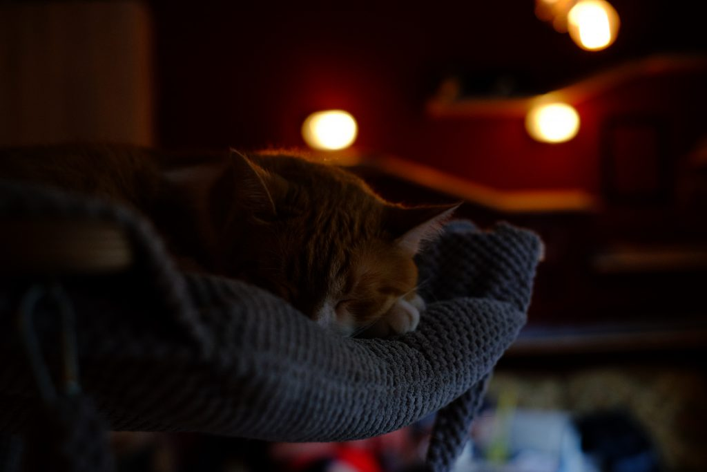 Sleeping cat 3 - free stock photo