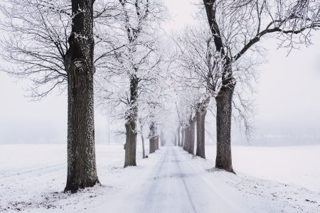 Snow covered road - free stock photo