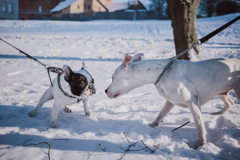 Two dogs meeting on a walk - free stock photo