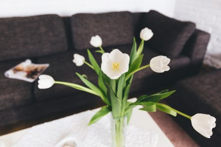 White tulips on the table - free stock photo