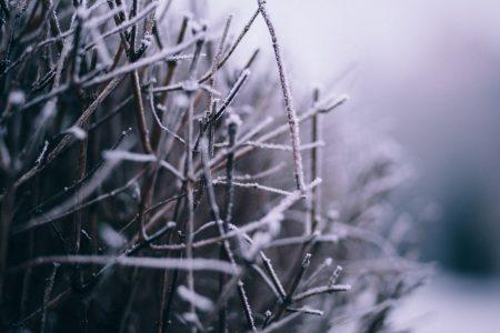 Winter frost 4