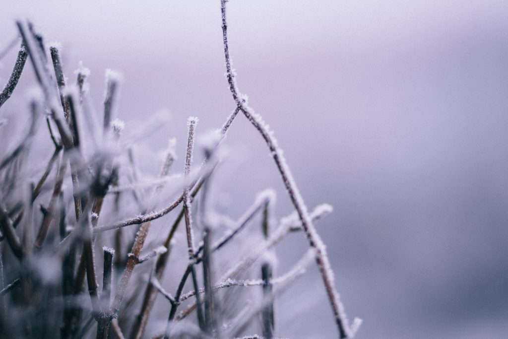 Winter frost 5 - free stock photo